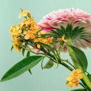 Gartenschauen und Partizipation