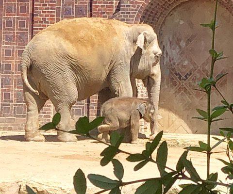 Büro Hitschfeld_Zeichen stehen auf wirtschaftlich gesund: FFV-Kuratorium des Zoo Leipzig mustern Zahlen und Elefantennachwuchs