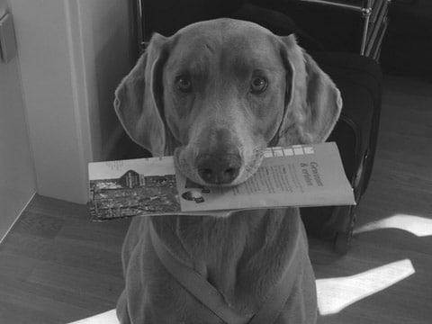 Wir trauern um Bürohund Pepe.