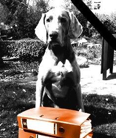Wir trauern um unseren Bürohund Pepe.