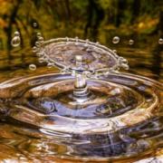 Tropfen fällt auf Wasseroberfläche, in der sich Bäume spiegeln