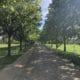 Allee mit grünen Bäumen und gepflasteter Straße